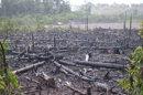 Poumon de la planète, l'Amazonie pourrait devenir émettrice de CO2