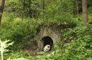 Grâce à la «diplomatie du panda», le zoo de Beauval va accueillir deux nouveaux pensionnaires