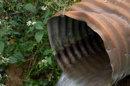 Suède : des eaux polluées aux anti-inflammatoires