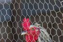 Un second cas mortel de grippe aviaire recensé en Chine