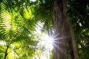 Indonésie : un drone au service de la lutte contre la déforestation
