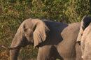 Le roi d'Espagne accusé d'avoir chassé l'éléphant