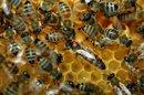 Des ruches pour surveiller l'environnement