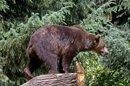 Inspecteur Ours retrouve un homme disparu dans le Tyrol