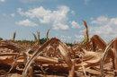 Une sécheresse historique aux Etats-Unis